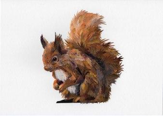Jimmy-Squirrel