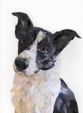 Henry-the-Border-Collie