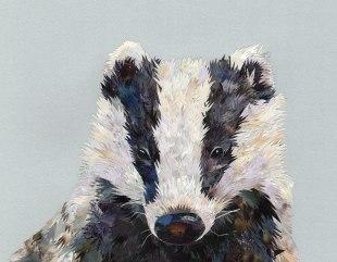 Grey-Badger