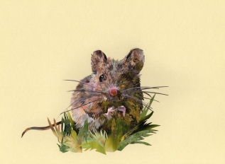 Matilda Mouse- Laura Brenchley