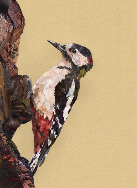 Woodpecker for website