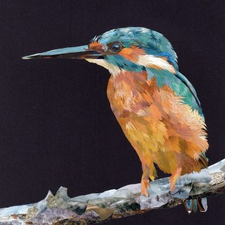 Kingfisher-#4