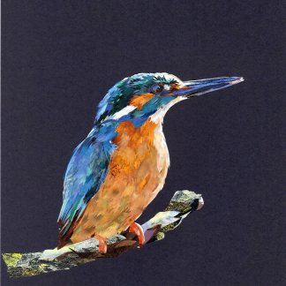 Kingfisher#3