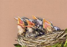 birds-nest-cropped